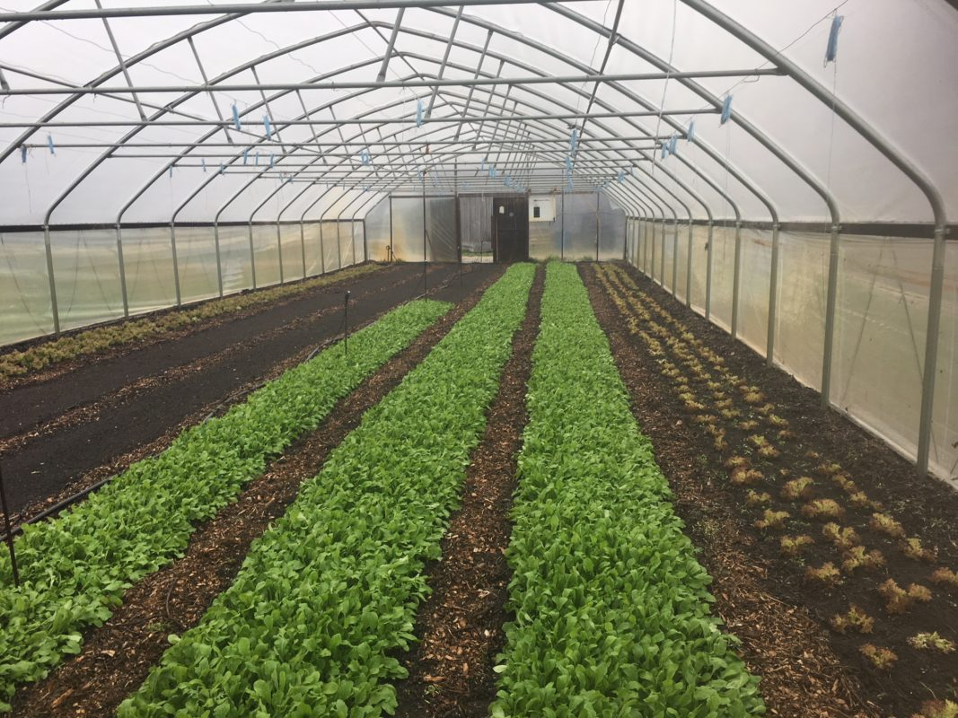 Greenhouse in November