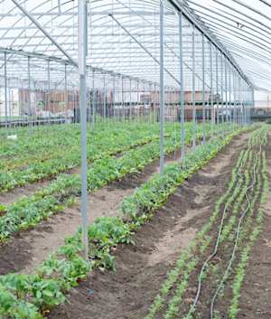 Vegetable Farm Equipment & Greenhouses