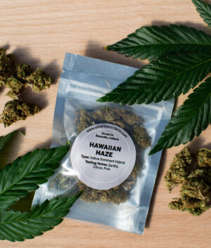 Silverthorn Farm Hawaiian Haze Hemp Flower